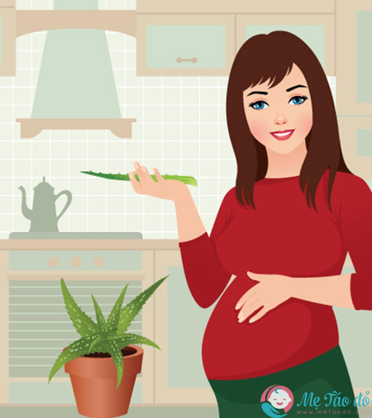 Liệu bà bầu ăn nha đam có tốt không?
